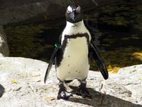 penguin-1531547